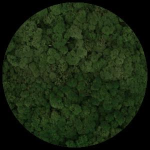 54_moss_green