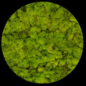 55_spring_green